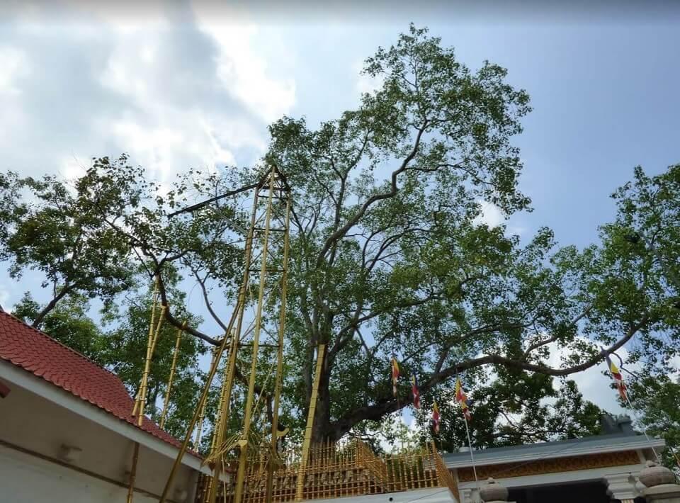 Java Sri Maha Bodhi de Anuradhapura