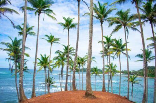 Coconut Tree Hill Sri Lanka