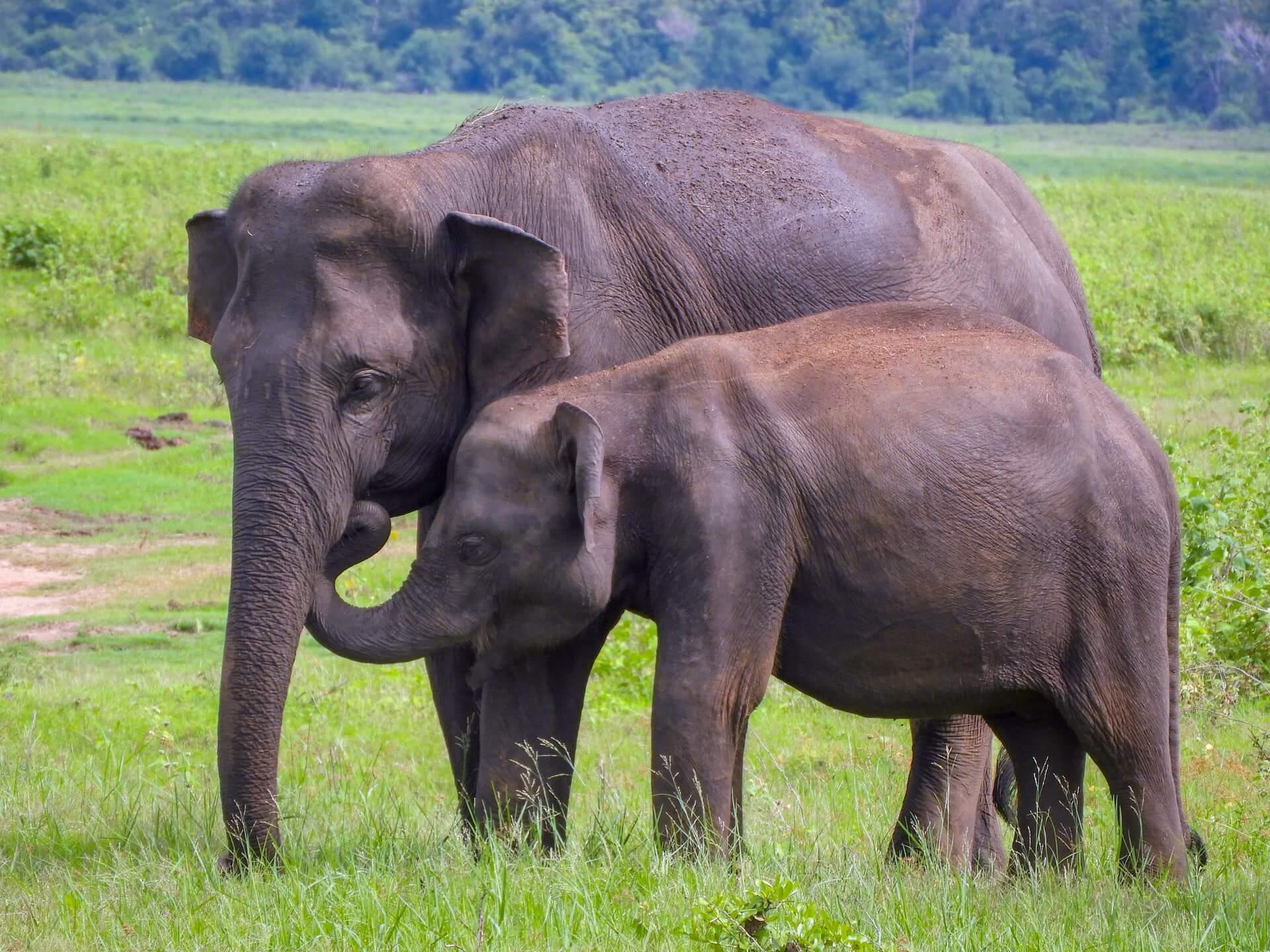 parques-nacionales-sri-lanka