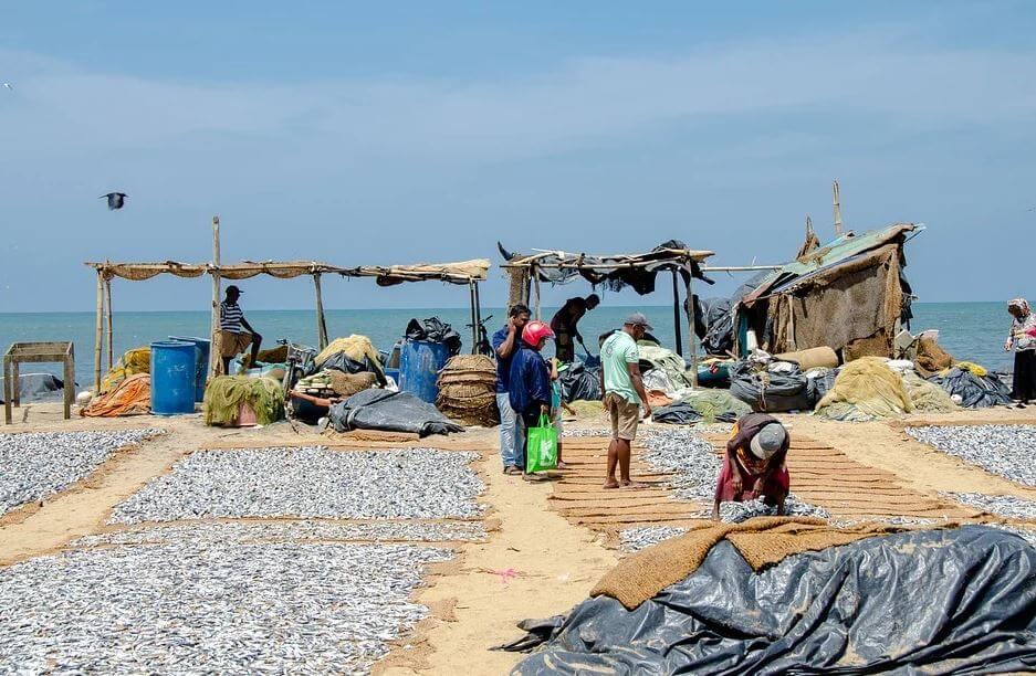 Pescado secandose al sol en la playa de Negombo